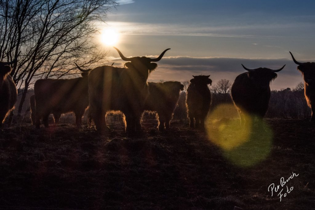 Skotsk Højland i vintersol